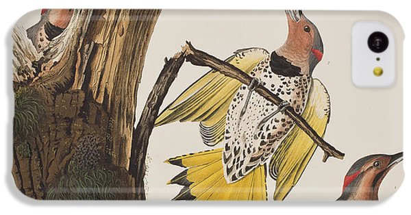 Golden-winged Woodpecker IPhone 5c Case by John James Audubon