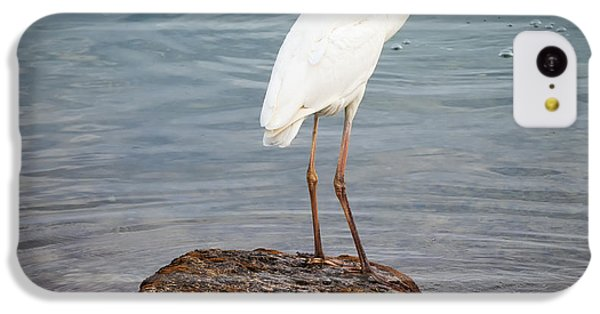 Great White Heron With Fish IPhone 5c Case by Elena Elisseeva