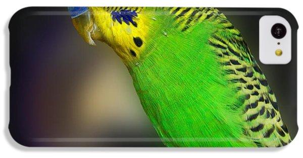 Green Parakeet Portrait IPhone 5c Case by Jai Johnson