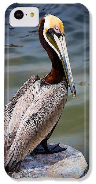 Grey Pelican IPhone 5c Case by Inge Johnsson