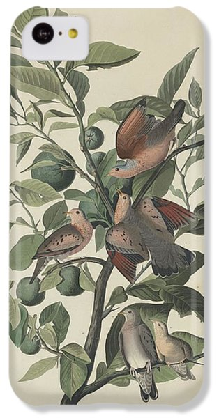 Ground Dove IPhone 5c Case by John James Audubon