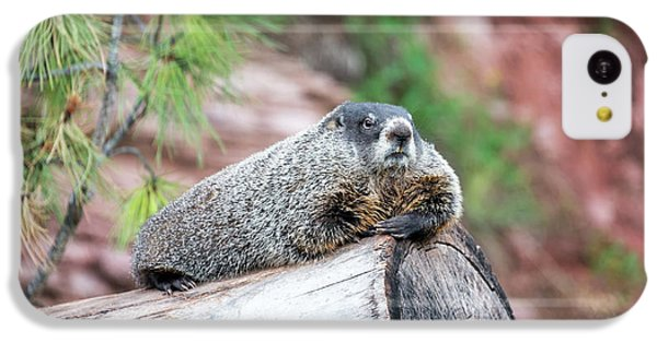 Groundhog On A Log IPhone 5c Case by Jess Kraft
