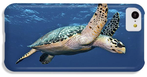 Hawksbill Sea Turtle In Mid-water IPhone 5c Case by Karen Doody