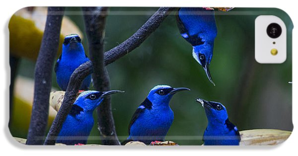 Honeycreeper IPhone 5c Case by Betsy Knapp