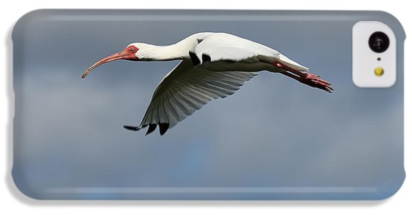 Ibis In Flight IPhone 5c Case by Carol Groenen