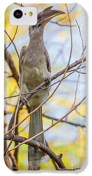 Indian Grey Hornbill IPhone 5c Case by B. G. Thomson