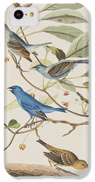Indigo Bird IPhone 5c Case by John James Audubon