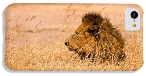 King Of The Pride IPhone 5c Case by Adam Romanowicz