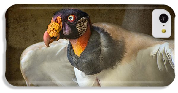 King Vulture IPhone 5c Case by Jamie Pham