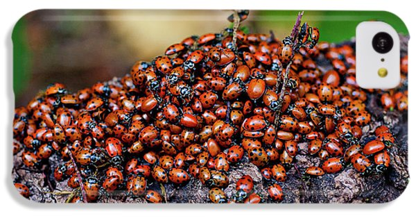 Ladybugs On Branch IPhone 5c Case by Garry Gay