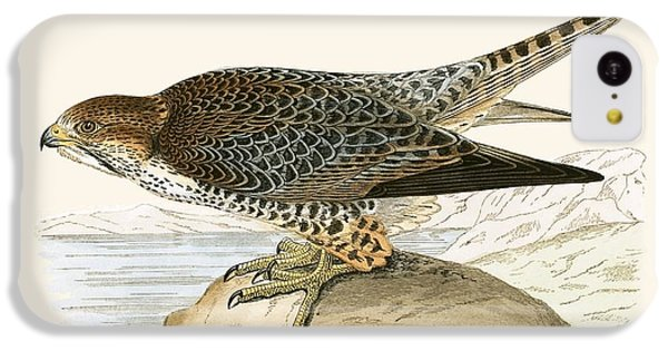 Lanner Falcon IPhone 5c Case by English School