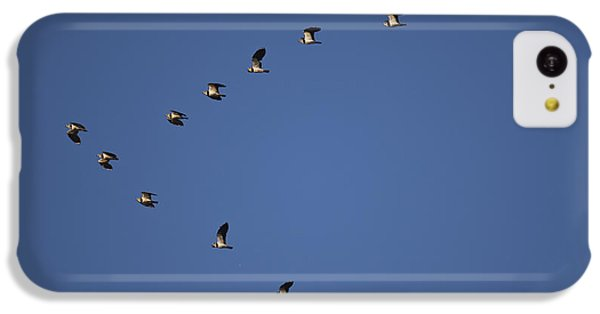 Lapwing Flock IPhone 5c Case by Per-Olov Eriksson