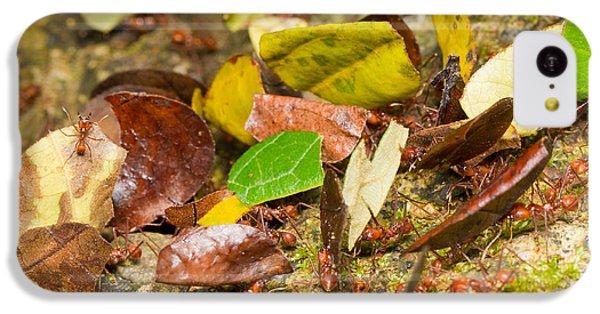 Leaf-cutter Ants IPhone 5c Case by B.G. Thomson