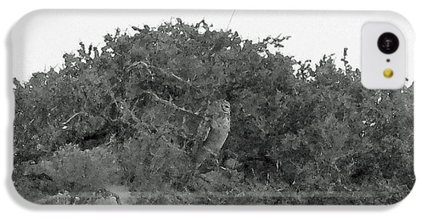 Lesser Horned Owl IPhone 5c Case by Sandy Taylor