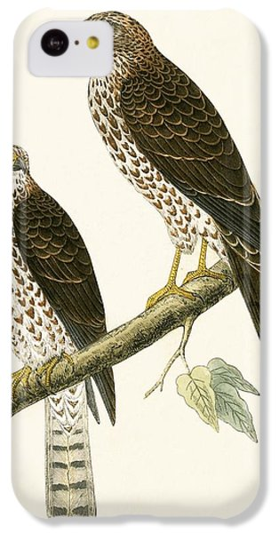 Levant Sparrow Hawk IPhone 5c Case by English School