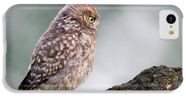 Little Owl Chick Practising Hunting Skills IPhone 5c Case by Roeselien Raimond