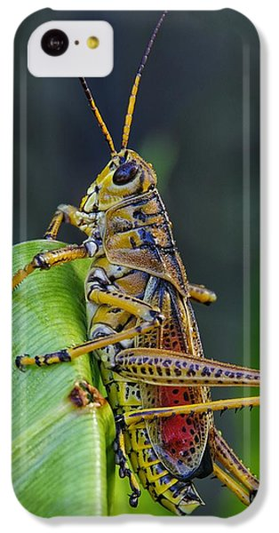 Lubber Grasshopper IPhone 5c Case by Richard Rizzo