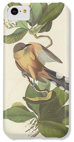 Mangrove Cuckoo IPhone 5c Case by John James Audubon