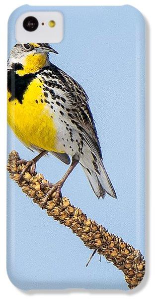 Meadowlark On Mullein Stalk IPhone 5c Case by Stephen Johnson