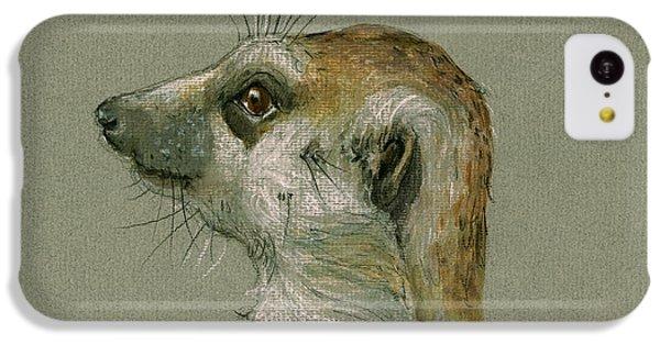 Meerkat Or Suricate Painting IPhone 5c Case by Juan  Bosco