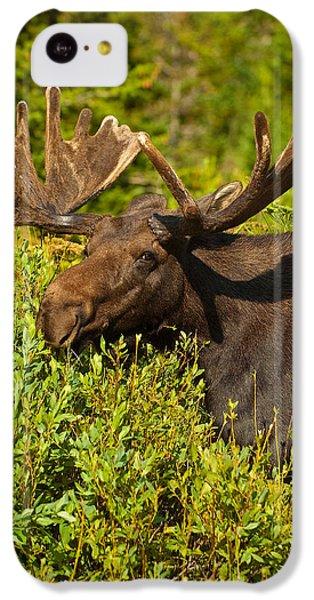 Moose IPhone 5c Case by Sebastian Musial