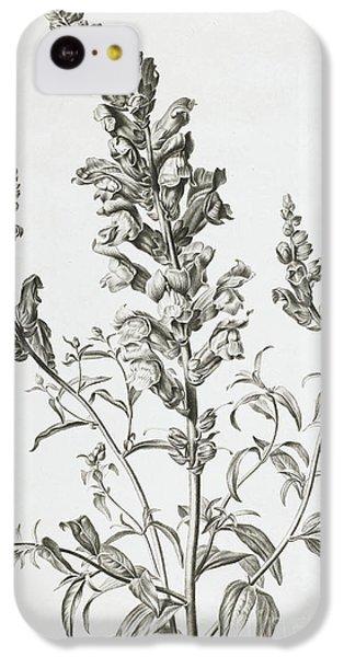 Mufle De Veau IPhone 5c Case by Gerard van Spaendonck