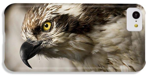 Osprey IPhone 5c Case by Adam Romanowicz
