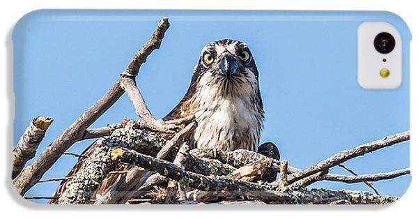 Osprey Eyes IPhone 5c Case by Paul Freidlund