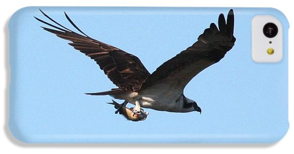 Osprey With Fish IPhone 5c Case by Carol Groenen