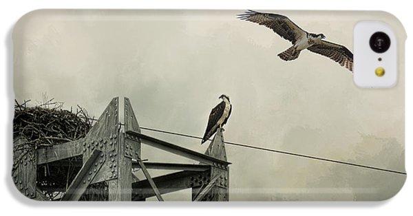 Ospreys At Pickwick IPhone 5c Case by Jai Johnson