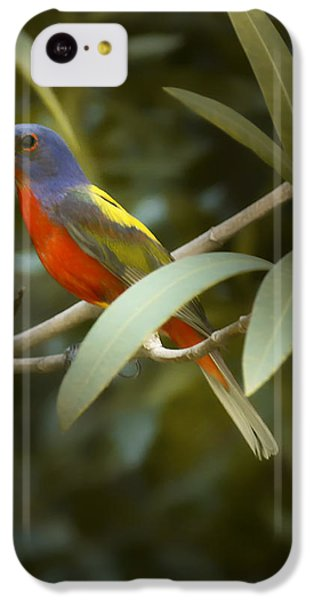Painted Bunting Male IPhone 5c Case by Phill Doherty