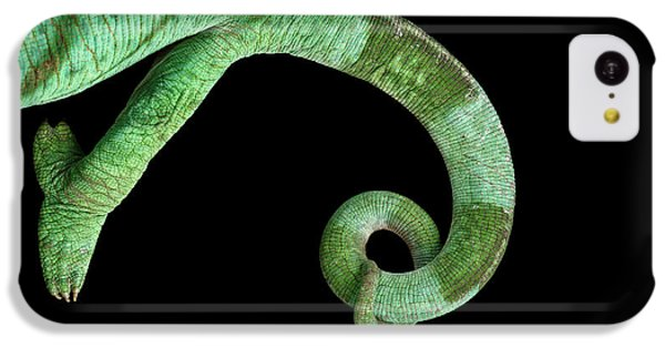 Parson Chameleon, Calumma Parsoni On Black Background, Top View IPhone 5c Case by Sergey Taran
