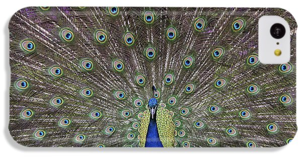 Peacock Display IPhone 5c Case by Tim Gainey