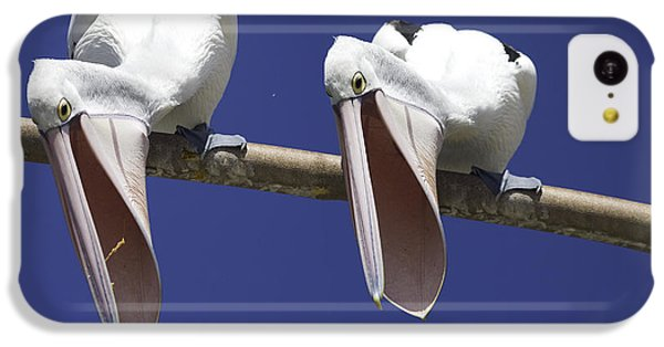 Pelican Burp IPhone 5c Case by Avalon Fine Art Photography