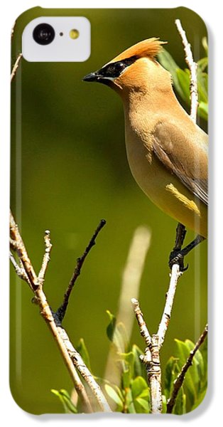 Perfectly Perched IPhone 5c Case by Adam Jewell