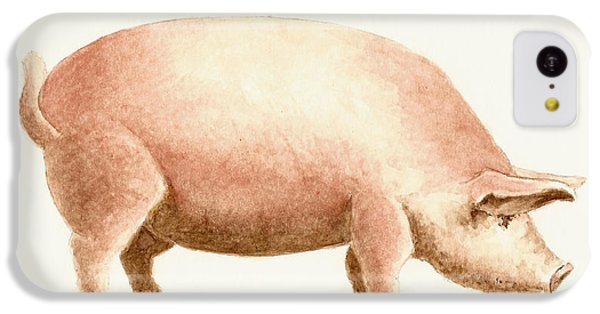 Pig IPhone 5c Case by Michael Vigliotti