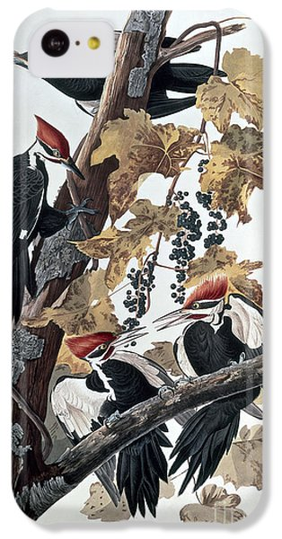 Pileated Woodpeckers IPhone 5c Case by John James Audubon