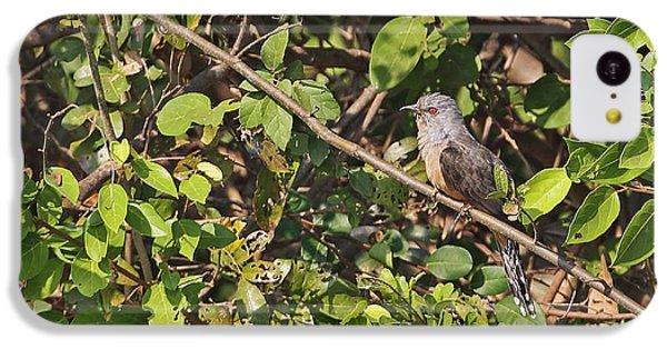 Plaintive Cuckoo IPhone 5c Case by Neil Bowman/FLPA