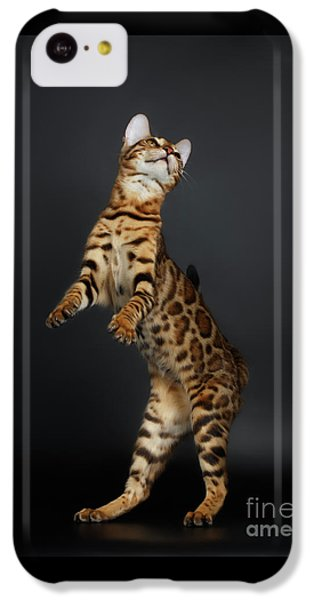 Playful Female Bengal Cat Stands On Rear Legs IPhone 5c Case by Sergey Taran
