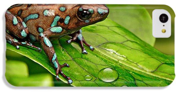 poison art frog Panama IPhone 5c Case by Dirk Ercken