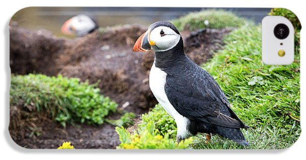 Puffin  IPhone 5c Case by Jane Rix