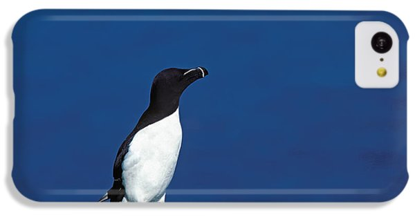 Razor-billed Auk Alca Torda IPhone 5c Case by Gerard Lacz