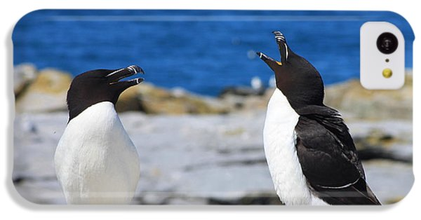 Razorbills Calling On Island IPhone 5c Case by John Burk