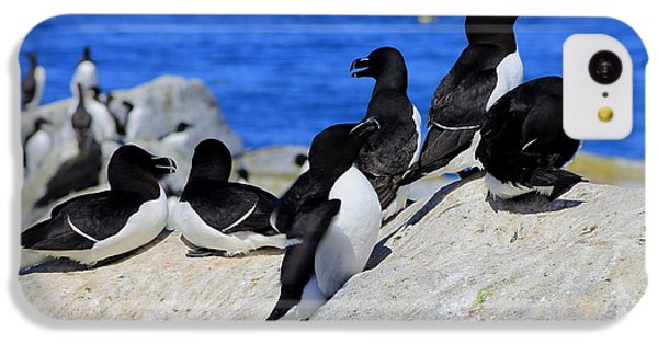 Razorbills IPhone 5c Case by John Burk