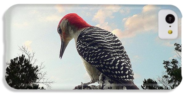 Red-bellied Woodpecker - Tree Top IPhone 5c Case by Al Powell Photography USA
