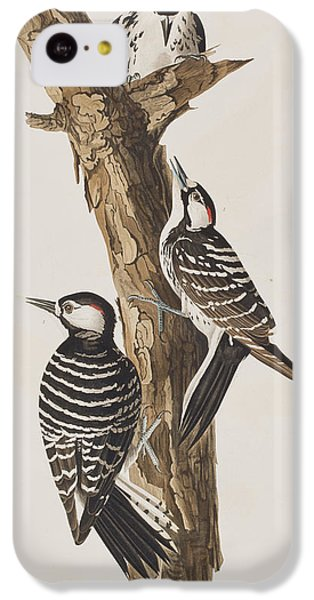 Red-cockaded Woodpecker IPhone 5c Case by John James Audubon