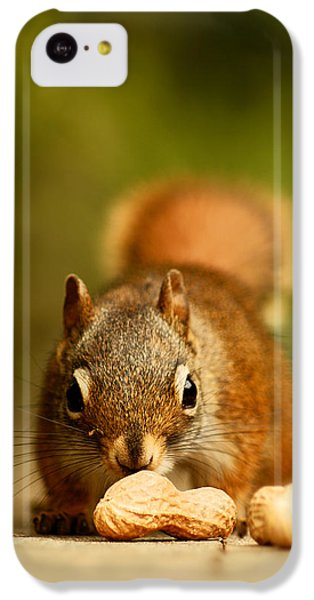 Red Squirrel   IPhone 5c Case by Cale Best
