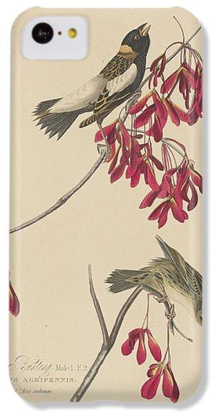 Rice Bunting IPhone 5c Case by John James Audubon