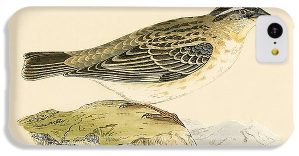 Rock Sparrow IPhone 5c Case by English School