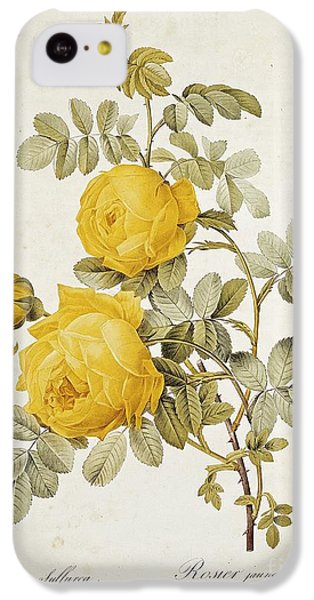 Rosa Sulfurea IPhone 5c Case by Pierre Redoute